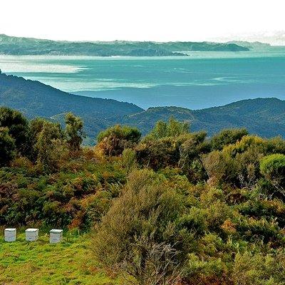 画像2: ニュージーランド産 マヌカハニー8+ 250g
